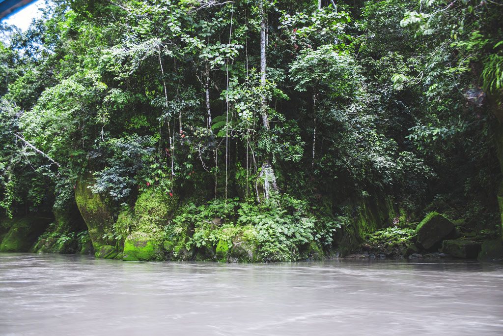 manun kansallispuisto peru
