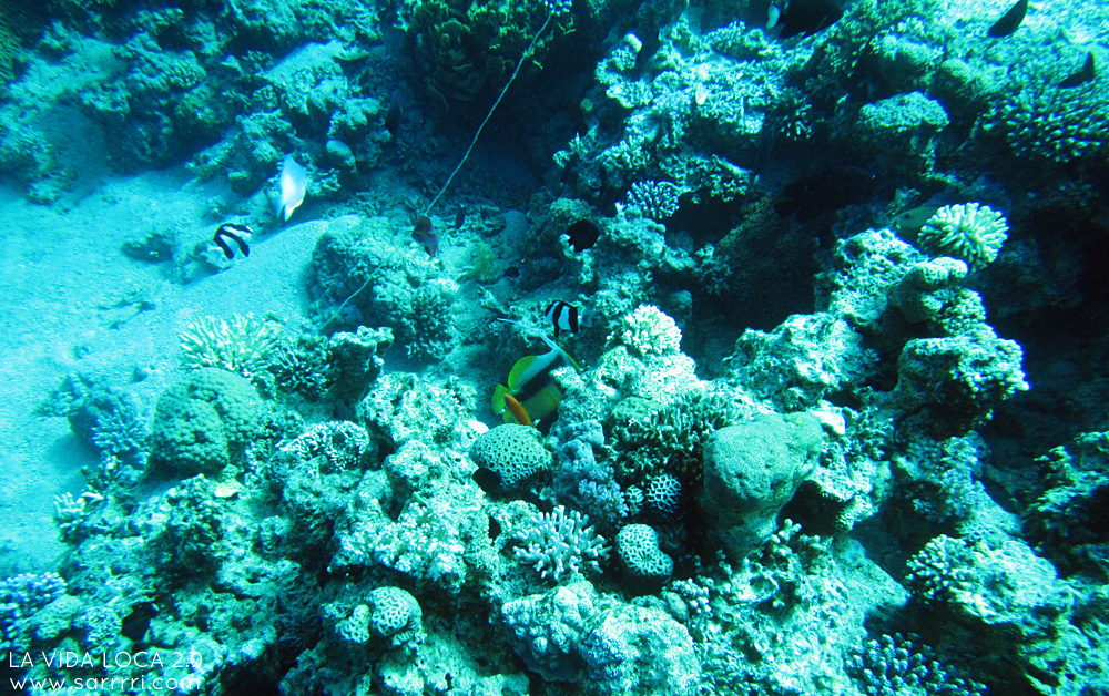 Sukellus Aqabassa | La Vida Loca 2.0 Matkablogi | www.sarrrri.com
