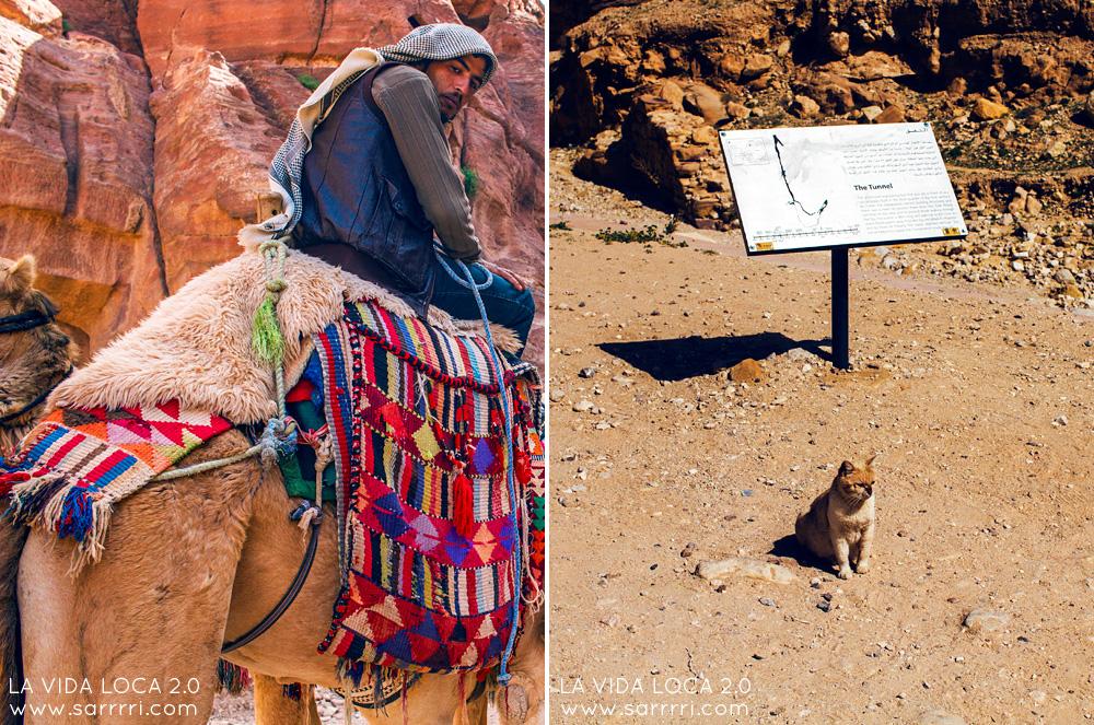 Petra Jordania | La Vida Loca 2.0 Matkablogi | www.sarrrri.com