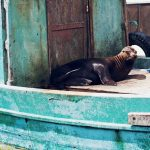 Galapagos | La Vida Loca 2.0 Matkablogi | www.sarrrri.com