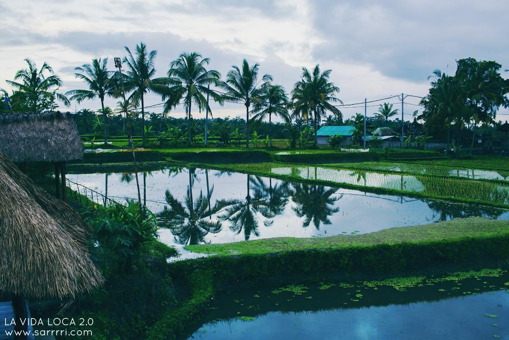 Ubud Bali riisipelto