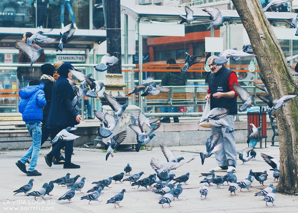 Istanbul linnut pulut
