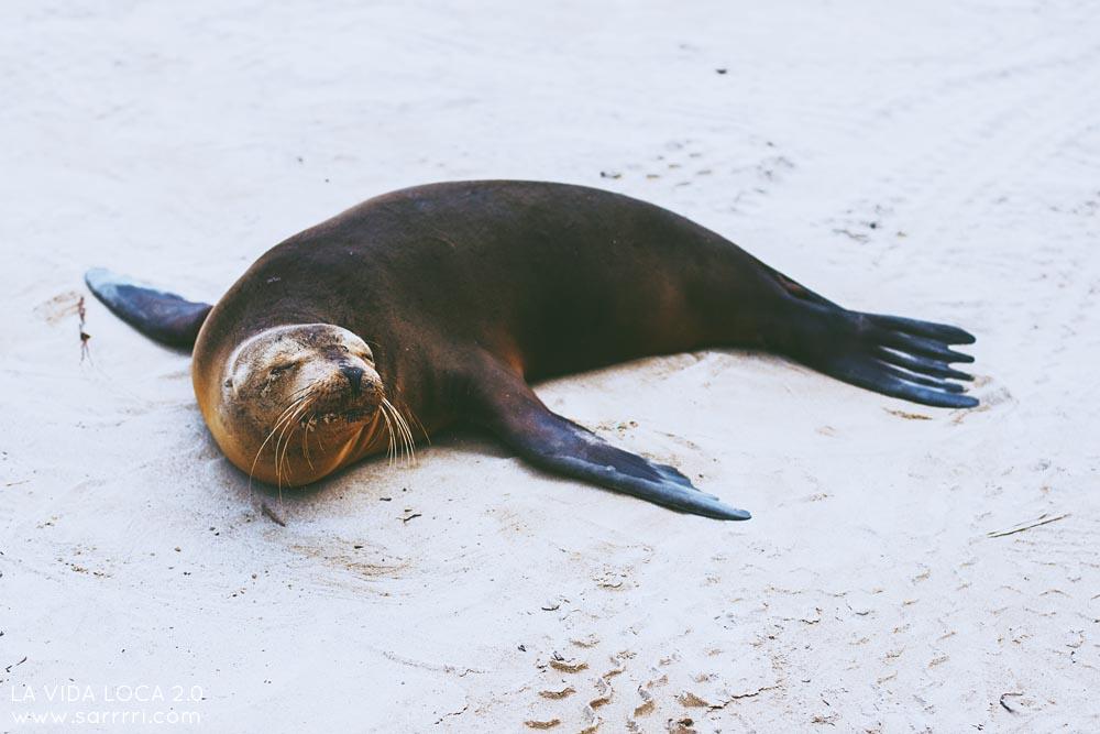 Galapagossaaret | La Vida Loca 2.0 Matkablogi | www.sarrrri.com